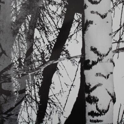 Fák öntapadós tapéta - 45 cm x 200 cm