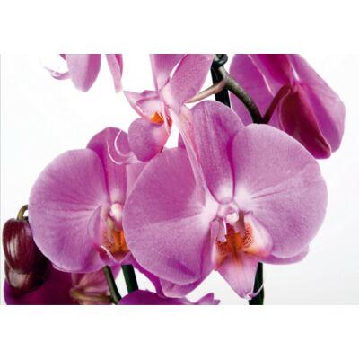 Orhidea poszter