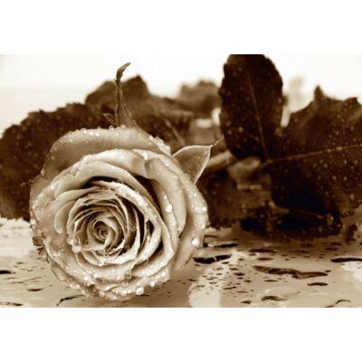Rózsa poszter