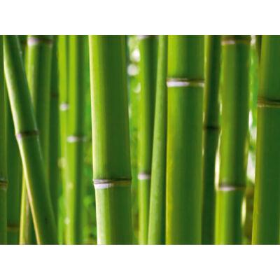 Bambusz poszter