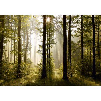 Erdő poszter