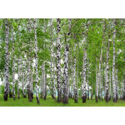 Fák poszter