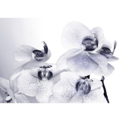 Orhidea fehéren-feketén poszter