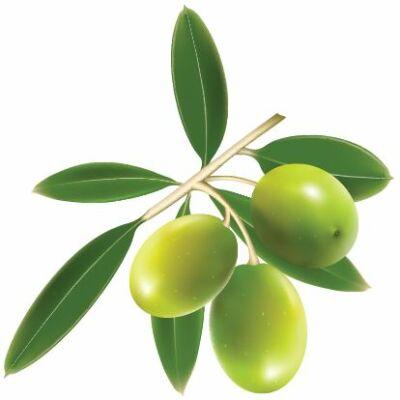 Zöld olívabogyó csempematrica