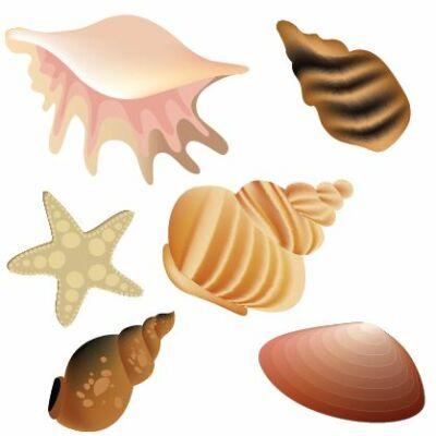 Kagylók Csempematrica